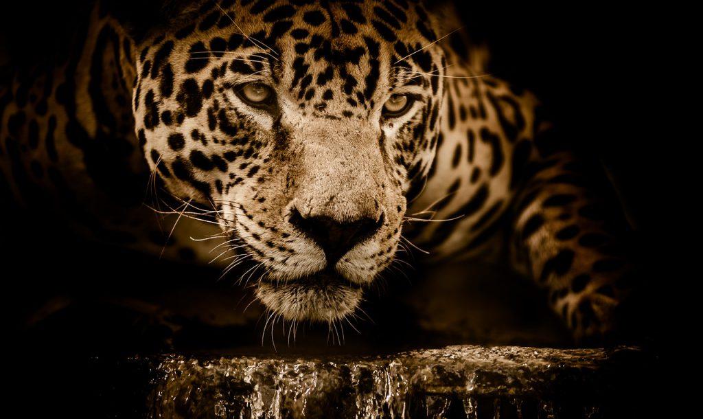 tour Pantanal offerte